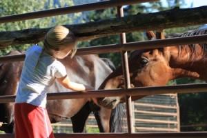 Children and horses programs