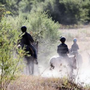 horse riding at California