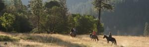 Western Trail Ride